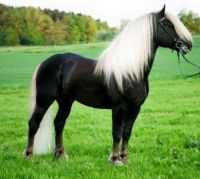 A beautiful horse.