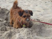Cody In The Sand :)