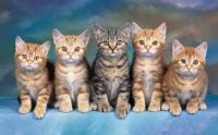 5 LOVELY LITTLE ONES...