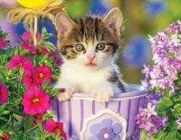 Kitten in a Flower Pot