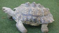 San Diego Zoo Safari Park Tortoise