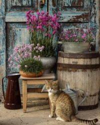 Every still life needs a cat :)