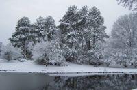 WinterTreesAndPond