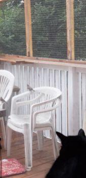 Ebony watching bird outside on catio - 2020