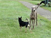 Bambi meets a big dog.....