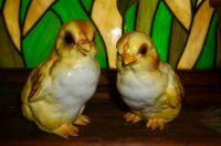 Vintage Ceramic Easter Chicks 2