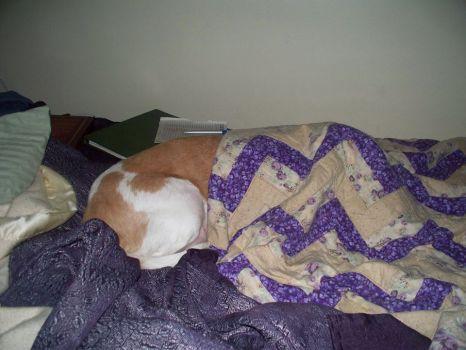 copper sleeping