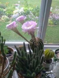 cactus7-16-19
