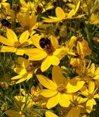 Buzzing flowers