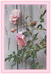 Summer Roses by Carl Benders