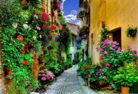 Floral alley
