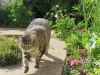 Milly - I'm really enjoying my 5 pm garden patrol