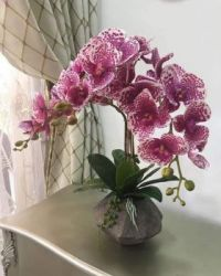 Pink, Red, and White Orchid