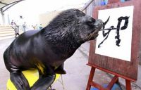 "A sea lion writing ""rabbit"" in Chinese characters."