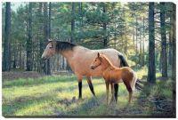 Wilderness Bond-Horses by Jim Kasper