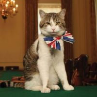 LARRY THE NUMBER 10 DOWNING STREET CAT