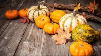 Pumpkins (small)