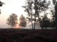 Lage Vuursche.... zonsopkomst in de mist!