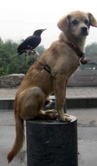 Unusual friends