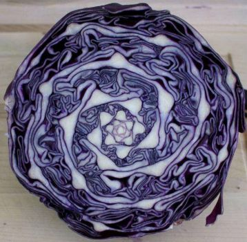 cabbage (small)