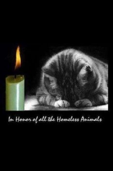 For all Homeless Animals