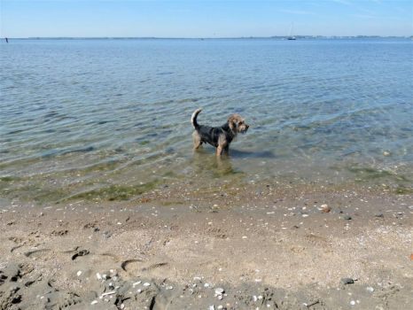 Bobbie, my daughter Sylvia's dog, loves being in the water/sea.