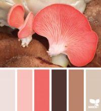 MushroomHues_150