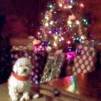 Christmas Minnie2
