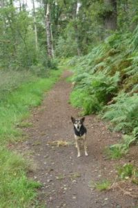 Bambi on a trail in Winterswijk