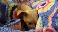 Bolero - Snuggly