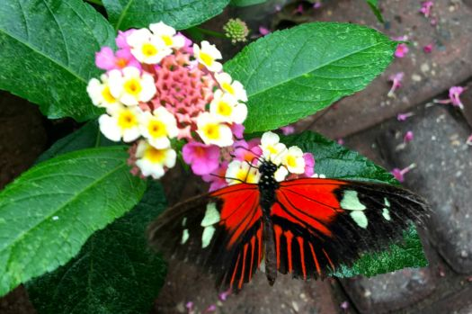 Butterfly at Mackinac Island