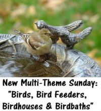 "New Multi-Theme Sunday:  ""BIRDS, BIRD FEEDERS, BIRDHOUSES & BIRDBATHS""  Enjoy yourself, hugs."