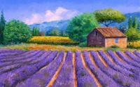 Lavender fields in France oil-painting