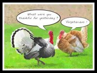Turkeys, the day after . . .