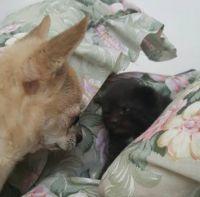 Civinek a koťátko