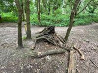 Woodstump