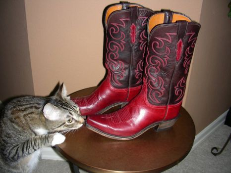 Bean checking out my new boots