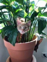 Kitty ambush