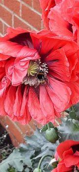 Jane's Bee