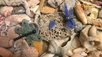 seashells etc.