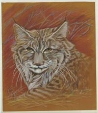 Bobcat Art by Mildred King