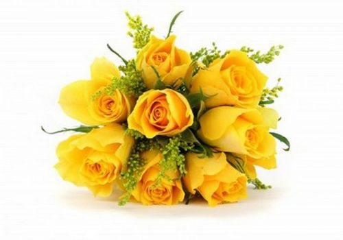 Yellow roses for Sladjana