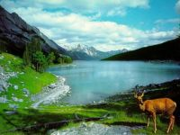 Mountain lake with deer