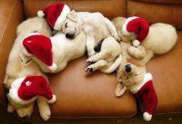 Dreaming of Santa