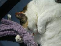 Cinder loves her octopus toy!