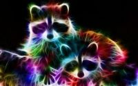cool coons