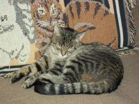 Petey loves his kitty blankie.