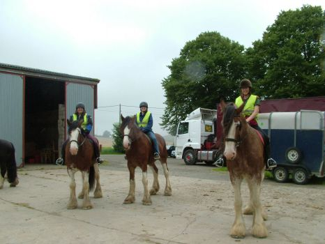 Clydesdale ride