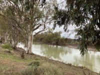 Banks of Murray River