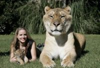 World's Largest Cat